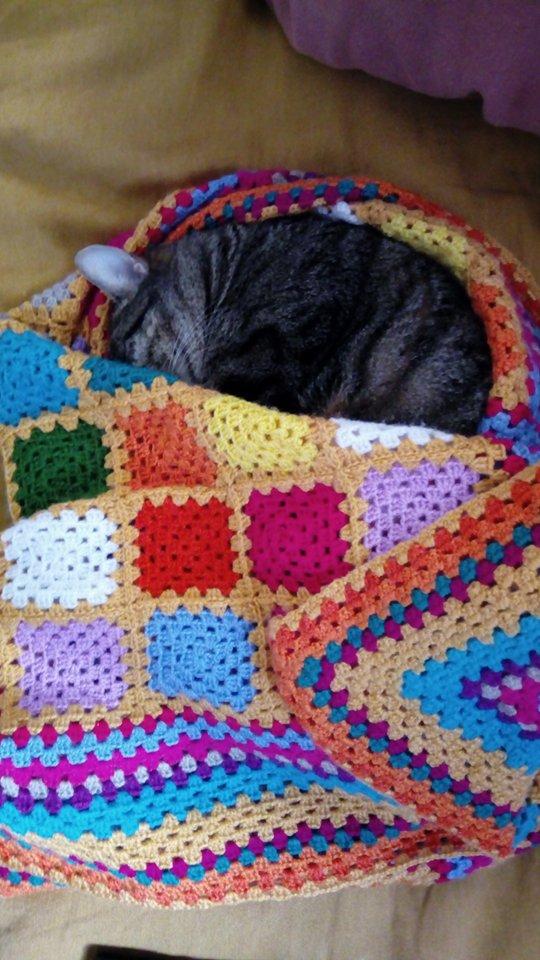 manta para limon gato